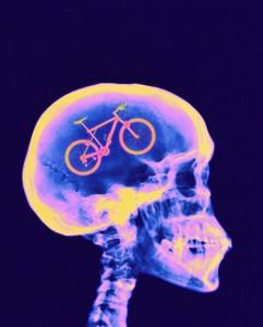 cerebro_ciclista
